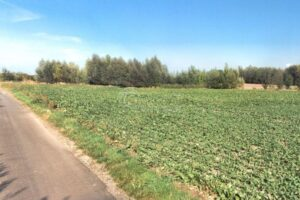 Prodej zemědělského pozemku – pole o výměře 32.542 m2, obec Praskačka